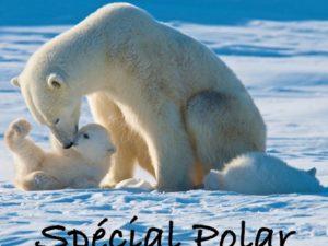 Dossier Polar/ 2 : Anna Gibson, Frédéric Grellier
